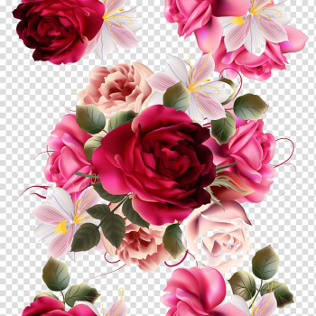 Red and pink roses , Rose Flower , Beautiful flowers material painting plant transparent background PNG clipart png image transparent background