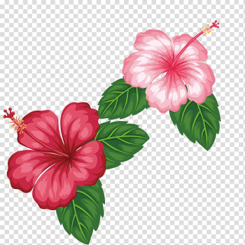 Two pink and red Hibiscus flowers illustration, Flower Tropics , Red flowers transparent background PNG clipart png image transparent background