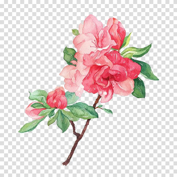 Garden roses Flower Illustration, Blooming flowers transparent background PNG clipart png image transparent background
