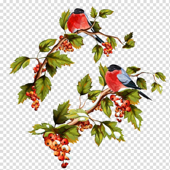 Red birds on red fruit tree illustration, Illustration, Flowers and birds do not pull the transparent background PNG clipart png image transparent background