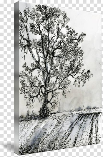 Drawing Painting Ink Birch, Poplar tree transparent background PNG clipart png image transparent background