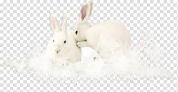 Domestic rabbit Easter Bunny Hare Tail Snout, Two white rabbits transparent background PNG clipart png image transparent background