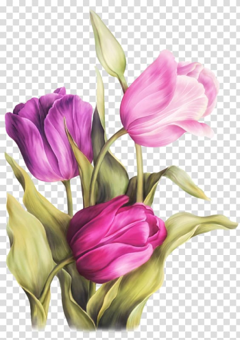 Pink tulips flowers, Watercolor painting Art Tulip, tulip watercolor transparent background PNG clipart png image transparent background