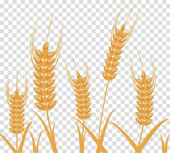 Wheat Illustration, Wheat pattern material exquisite design transparent background PNG clipart png image transparent background