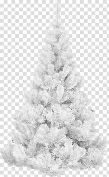 Christmas tree Spruce, christmas tree transparent background PNG clipart png image transparent background