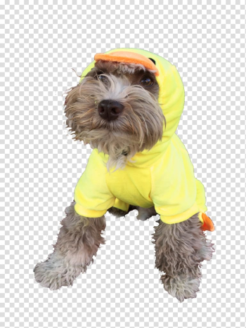 Schnoodle Disguise Costume party Halloween, Halloween transparent background PNG clipart png image transparent background
