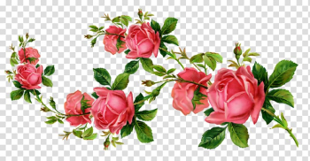 Garden roses Cut flowers , flower transparent background PNG clipart png image transparent background