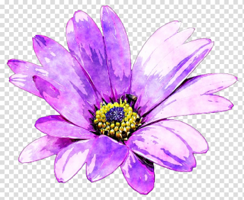 Purple Flower Watercolor painting, Purple daisies transparent background PNG clipart png image transparent background