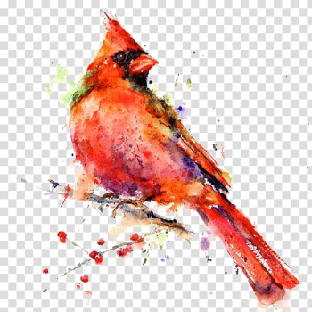 Male cardinal bird painting, Bird Watercolor painting Drawing Canvas print, Hand-painted parrot transparent background PNG clipart png image transparent background