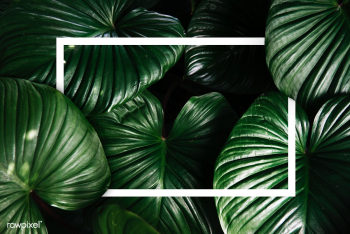 Green tropical background | Free stock psd mockup - 599788