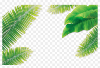 Leaf Coconut Arecaceae - Banana Tree Leaves Png png image transparent background