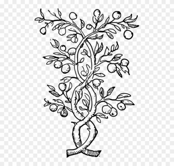 Plants Climbers Vines Black And White Leaves Stems - Olive Tree Coloring Pages png image transparent background