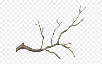Wg-24 - Real Tree Branch Png png image transparent background