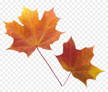 Autumn Png Leaf - Fall Leaves Transparent Background png image transparent background