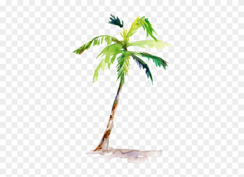 Watercolor Painting Arecaceae Drawing - Palm Tree Water Color png image transparent background