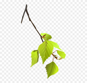 Birch, Branch, Leaves, Plant, Nature, Tree - Tree Branch Vector Png png image transparent background
