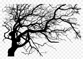 Asheville Haunted Hearse Tour Dark Ride Tours - Black Creepy Tree Png png image transparent background