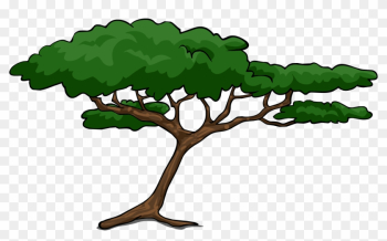 Clipart African Tree Trees - Clip Art Acacia Tree png image transparent background