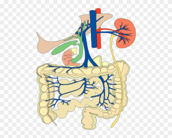 Digestive Organs Medical Diagram Clip Art Free Vector - 對症飲食 - 專科(新增訂本) [book] png image transparent background