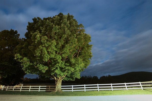 night tree png image transparent background