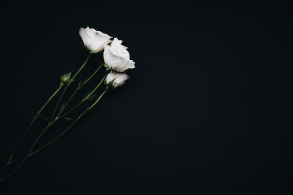 White Flowers On Black Background Nohat Free For Designer