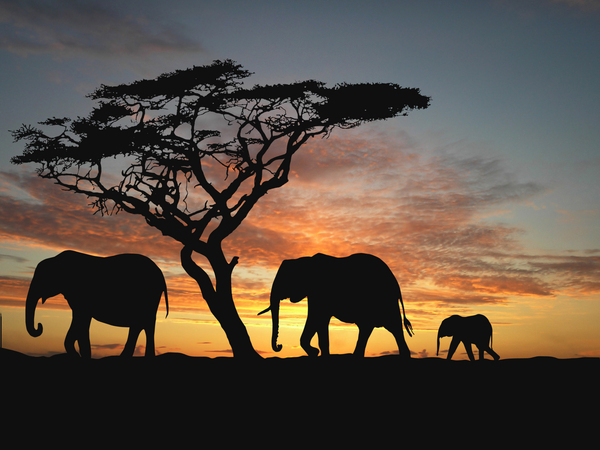 Group of elephant in africa - Nohat