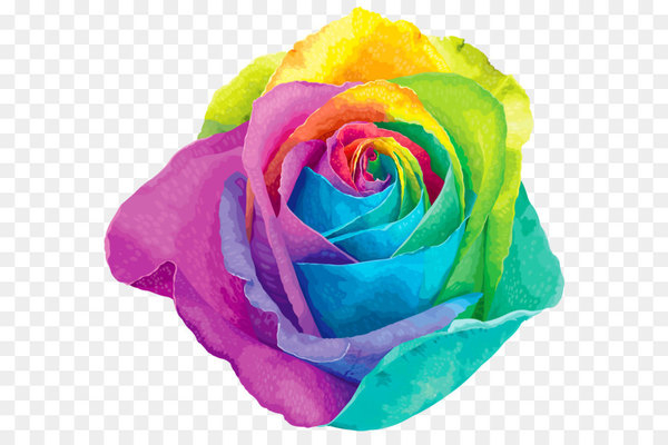 Flower Rainbow rose Clip art - Multicolored Rainbow Rose Transparent PNG Clip Art Image  png image transparent background