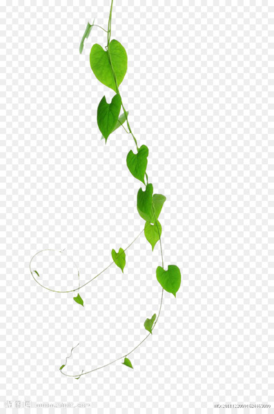Vine Green Plant Leaf - Vines are available for free download  png image transparent background