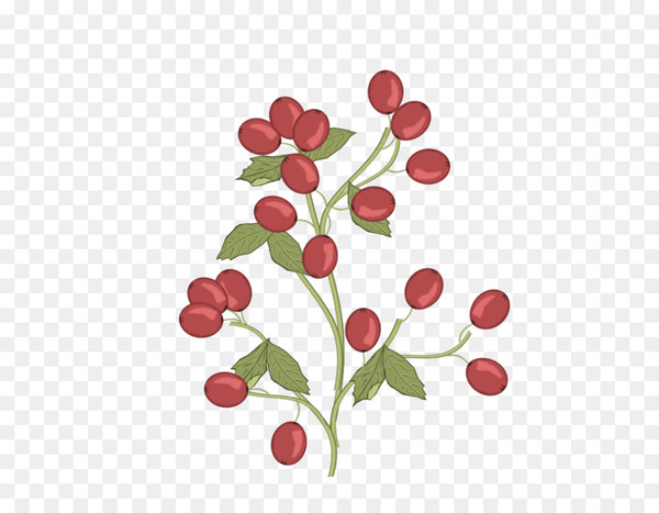 Lingonberry Pink peppercorn Radish Flower - clipps sign  png image transparent background