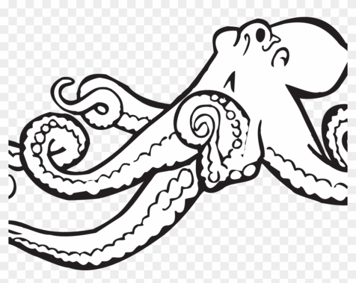 Alphabet O Is For Octopus Coloring Page Free Printable Realistic Octopus Coloring Page Nohat Free For Designer
